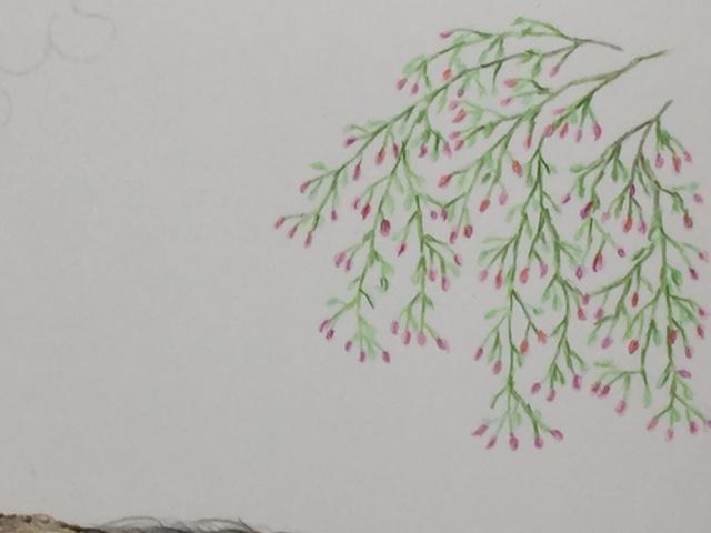 色鉛筆 年賀状 干支 猪 メイキング